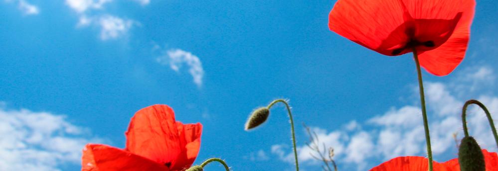 Fleur de la Fondation Oeuvre de la Croix Saint-Simon
